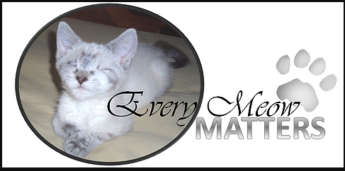 every meow matters logo